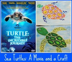 Sea Turtles- Kid World Citizen