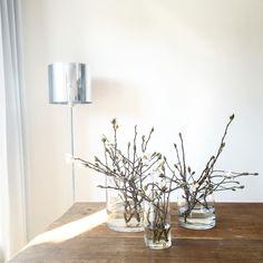 Sonnenlicht #samstag #sonne #magnolia #magnolien #magnolienzweig #whiteliving #white #allwhite #grey #grau #holz #echtholztisch #gesindetisch #antik #vintage #simple #simplicity #minimalism #germaninteriorbloggers #wohnkonfetti #solebich #Vasenkonfetti