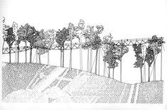 The Treetop Walk. Image courtesy of Donaldson + Warn
