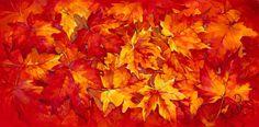 Irina Pavlik Bakkenes   Rode bladeren