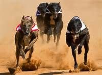 TAKE ACTION: For Iowa residents only: Free the Greyhounds! It's Time to End Dog Racing !   Care2 News Network   Please SIGN and share petition. Thanks (If you don't live in IA, please share the story at least.)