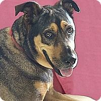LOUISE - Adopt A Pet :: Louise (Westhampton) - New York, NY
