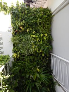 Private Residence Green Wall, Singapore #GreenWall #LivingWall #VerticalGarden