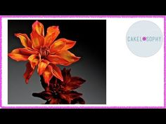 How to Make Dahlia Flower out of Gumpaste Cold Porcelain - YouTube