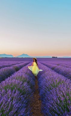 900 Lavender Ideas In 2021 Lavender Lavender Fields Lovely Lavender