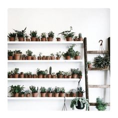 dream herb & mini cacti garden [for apartment living] by thegreeneryclinic