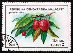 REPUBLICA MALAGASY - CIRCA 1992: a stamp printed in the Malagasy (Madagascar) shows Litchis, Litchi Chinensis, Tropical Fruit, circa 1992