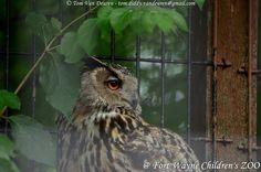 oehoe - Bubo bubo - Eurasian Eagle-Owl | by MrTDiddy