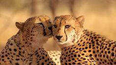 A Little Kiss.