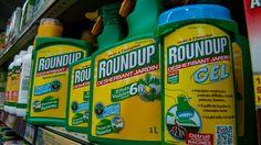 #Glyphosate : la Commission européenne reporte sa décision - Franceinfo: Franceinfo Glyphosate : la Commission européenne reporte sa…
