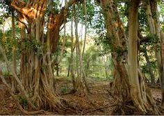 Image result for jungle india