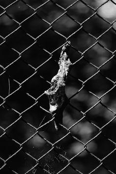 Goya Kusz: Nieprzyjaźń