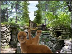 America's Stonehenge -- site can be used to make astronomical sitings. The alpacas are not photo-shopped. Ancient Aliens, Ancient History, Astronomical Calendar, April Vacation, Great Places, Places To Visit, North Salem, Ley Lines, Meeting Place