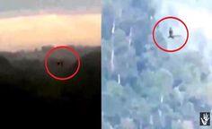 BRASIL - Dragão Real Filmado na Floresta Amazônica? Intraterrenos começam aparecer?