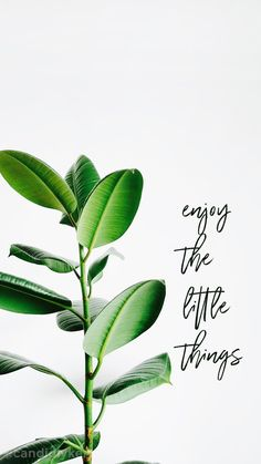Enjoy the little things Be kind Quotes.
