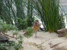 shorebirds exhibit