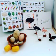 #learningaboutBIRDS