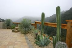 awesome juxtaposition between succulents and the misty mountains beyond