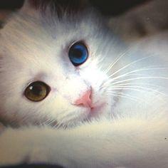 Beautiful baby kitten
