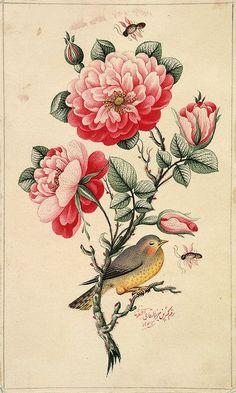 fleurs: