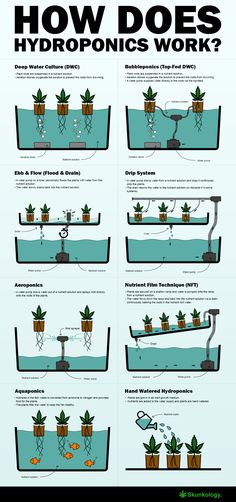How does hydroponics work? In this article we& show you how the different hydroponic systems work and what advantages each has for growing weed. Hydroponic Farming, Aquaponics Greenhouse, Hydroponic Growing, Aquaponics Diy, Hydroponics System, Indoor Farming, Diy Greenhouse Plans, Growing Weed, Drip System