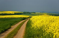 Fields of Gold | Flickr - Photo Sharing!