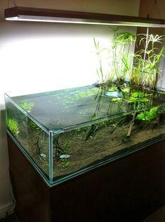 Aquarium Care Tips for Saltwater Fish Coral Aquarium, Glass Aquarium, Nature Aquarium, Aquarium Design, Saltwater Aquarium, Aquarium Fish Tank, Planted Aquarium, Nano Aquarium, Tropical Freshwater Fish