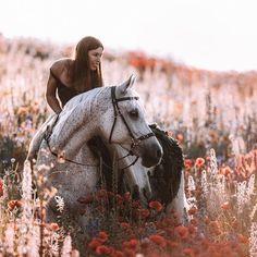 Horse Girl Photography, Equine Photography, Horse Costumes, E Sport, Horse Portrait, Horse Photos, Show Horses, Horse Riding, Horseback Riding