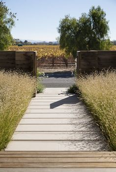 Vineyard Retreat in California's Napa Valley by Scott Lewis. For the front path, Lewis chose wide limestone pavers because the material stays cool underfoot even in the intense summer heat of the Napa Valley Water Wise Landscaping, Modern Landscaping, Outdoor Landscaping, Backyard Landscaping, Outdoor Gardens, Garden Pavers, Landscaping Ideas, Napa Valley, Gardening