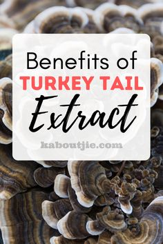 Due to the many amazing benefits of turkey tail extract turkey tail mushrooms are one of the most expensive medicinal mushrooms on the market. #Health #Mushrooms #TurkeyTailMushrooms #TurkeyTailExtract