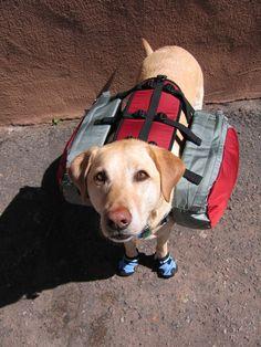 Best Dog Packs