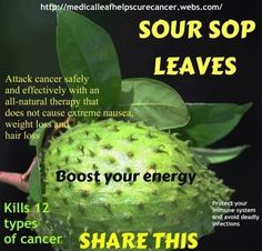 Soursop Tea: 1. Clean 2 - 3 small or 2 large  organic pesticide free soursop leaves. Boil about 1 1/2 cups of water. Tear apart the soursop leaves into small pieces using your fingers or cut with scissors. Place the (Guanabana, Gravoila,) Soursop leaves in your tea cup and pour the boiling water on them.  Then cover for 30 minutes. Strain your tea and add agave sweetener, stevia, brown sugar, honey or other natural sweetener if you have a sweet tooth.