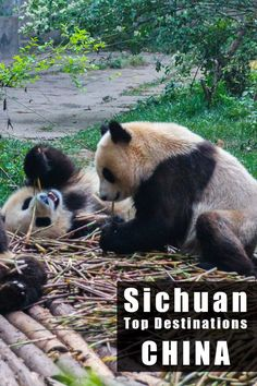 A great itinerary through Sichuan, China - Best destinations to visit http://mel365.com/sichuan-highlights-a-10-days-travel-itinerary/
