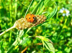 Ladybird in Velez Blanco, Andalucía, España. We love it!
