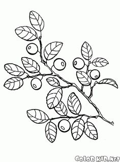 Painting Coloring Books New Berries Coloring Pages to and Print for Free Coloring Pages Nature, School Coloring Pages, Mermaid Coloring Pages, Coloring Pages To Print, Coloring Book Pages, Superhero Coloring Pages, Pokemon Coloring, Apple Coloring, Princess Coloring