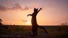 Amusing Shots of Cats in Ninja Poses – Fubiz Media
