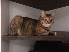 favd_kinaco-cat-January 17 2018 at 10:31PM