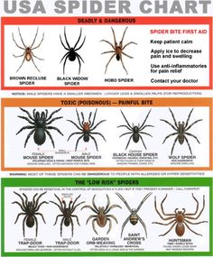 I hate spiders. But a good thing to know!