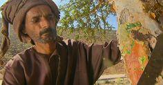 Beduíno mostra como é feita extração do melhor de incenso do mundo