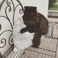 Kočka na polštáři. #cat #divokakocka #black #sleep