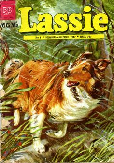 A cover gallery for the comic book Lassie Rough Collie, Collie Dog, Collie Puppies, Vintage Comic Books, Vintage Comics, Vintage Ads, Cinema Tv, Comics Story, Old Comics