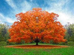 Un albero tipicamente autunnale