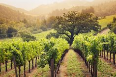 The Napa Valley region is home to more than 45,000 acres of vineyards and some of the world's largest wineries, but you'll find a wealth of things to do and enjoy beyond the wine tours and food tastings. #winetasting #winery