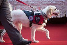 7 inspiring tales of loyal service animals