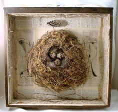 Bird's nest assemblage