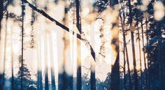 Der eine sieht nur Bäume, Probleme dicht an dicht. Der andre Zwischenräume und das Licht. - Zitat von Unbekannt