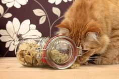 Chewy Homemade Treats Ingredients: 1 large egg 1 4-oz jar chicken and brown rice baby food (or something meaty, which may include canned wet cat food) 1/4 cup parsley, coarsely chopped 2 teaspoons olive oil 2 tablespoons water 1 cup brown rice flour 1/2 cup cooked white (or brown) rice