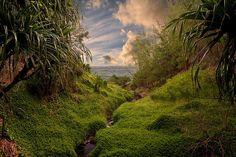 The trail to Queens Bath, Kauai, Hawaii