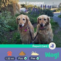 The dog walking app. Get a photo report after each walk! walk HALF OFF :) Wag Dog Walking, Walking App, Photo Report, Pet Care, Animals Beautiful, Pup, Humor, Cats, Instagram