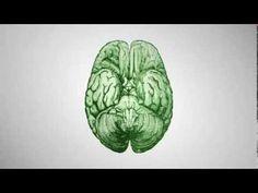 Hogyan hangoljuk össze jobb és bal agyféltekénk működését